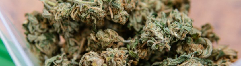 Research What Strains Yield Big Buds
